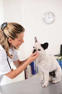 Whats a good career with animals?