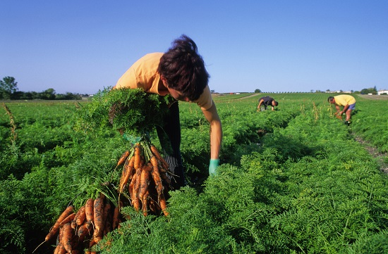Agriculture Food Natural Resources Careers
