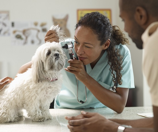 Veterinarian caring for a dog