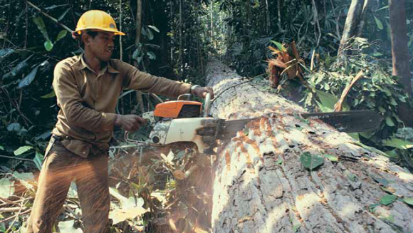 Forest and conservation worker