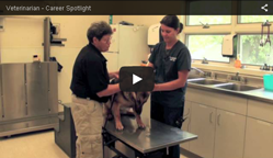 Video on Veterinarian