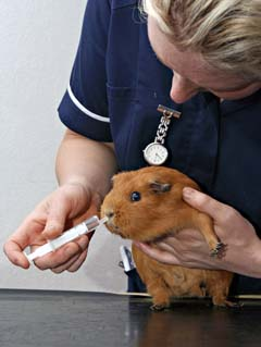 veterinary assistants and laboratory animal caretakers image