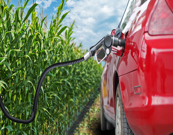 What Happened To Ethanol Producer Prices After Passage Of